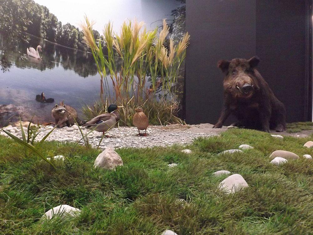 Diorama (Jagd- und Fischereimuseum)