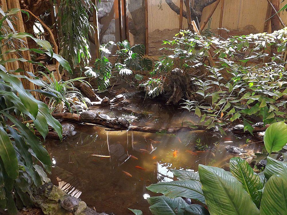 Dschungelhaus (Zoo Eberswalde)