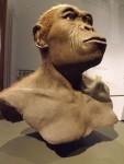 Homo habilis (Landesmuseum Hessen Darmstadt)
