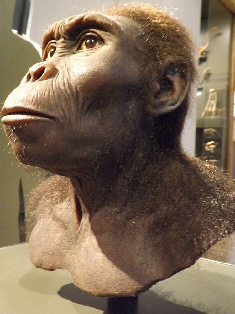 Kenyanthropus platyops (Landesmuseum Hessen Darmstadt)