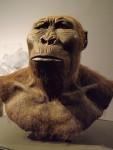 Paranthropus boisei (Landesmuseum Hessen Darmstadt)