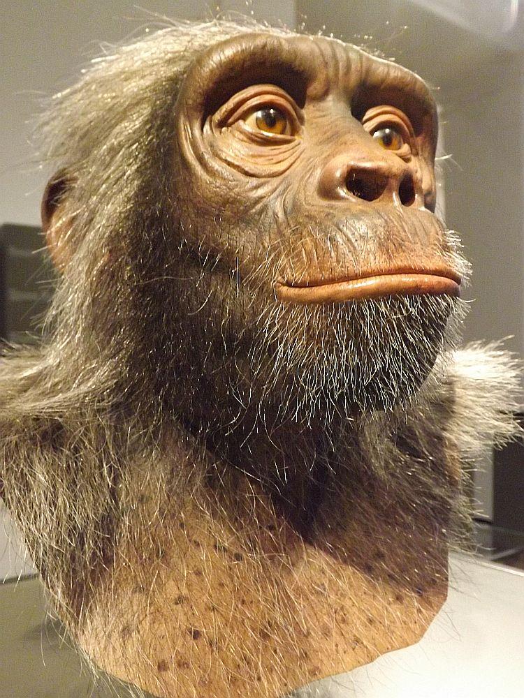 Sahelanthropus tchadensis (Landesmuseum Hessen Darmstadt)