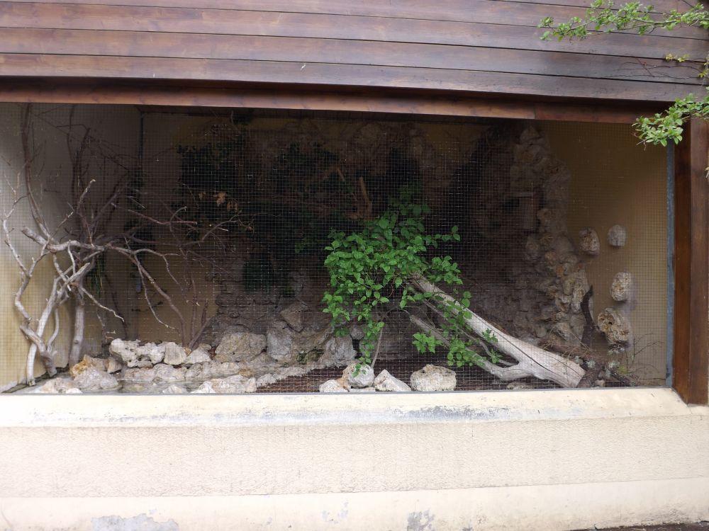 Außenanlage für Seidenstar, Rotkardinal und Wacholderdrossel (Zoo Augsburg)