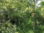 Zauberwald im Bürgerpark Wernigerode