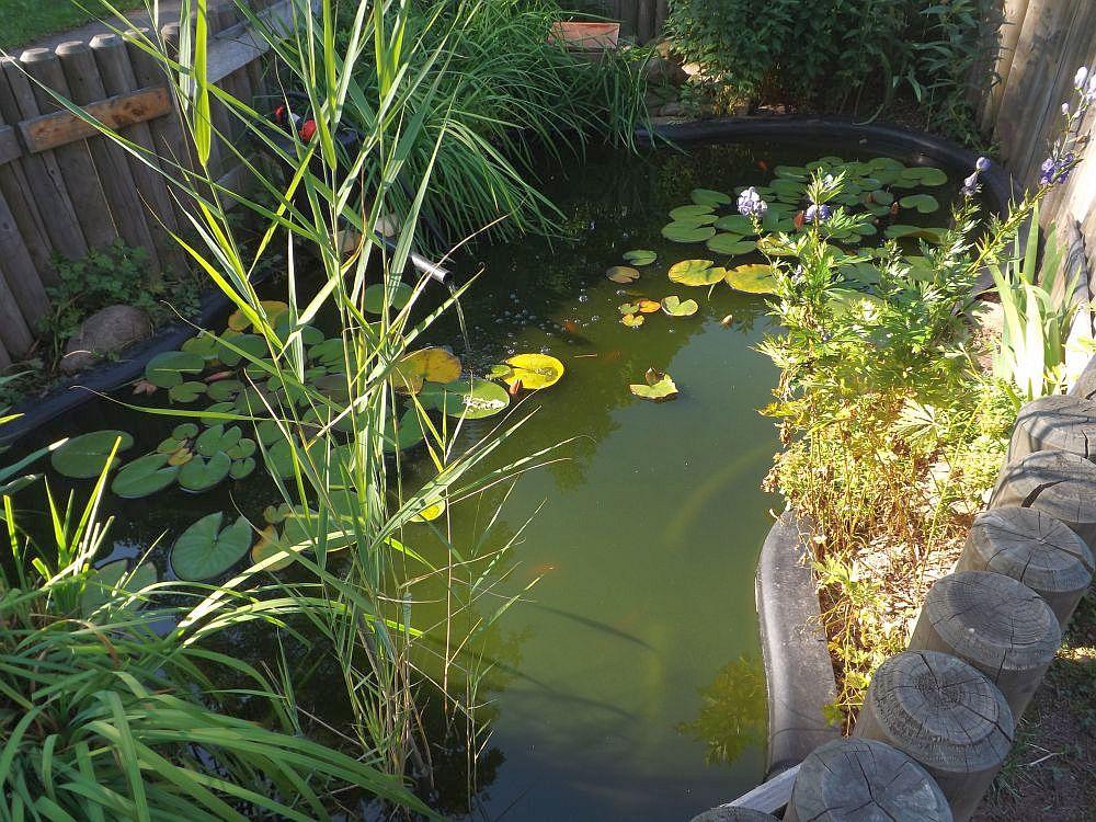 Goldfischteich (Wildpark Geising)