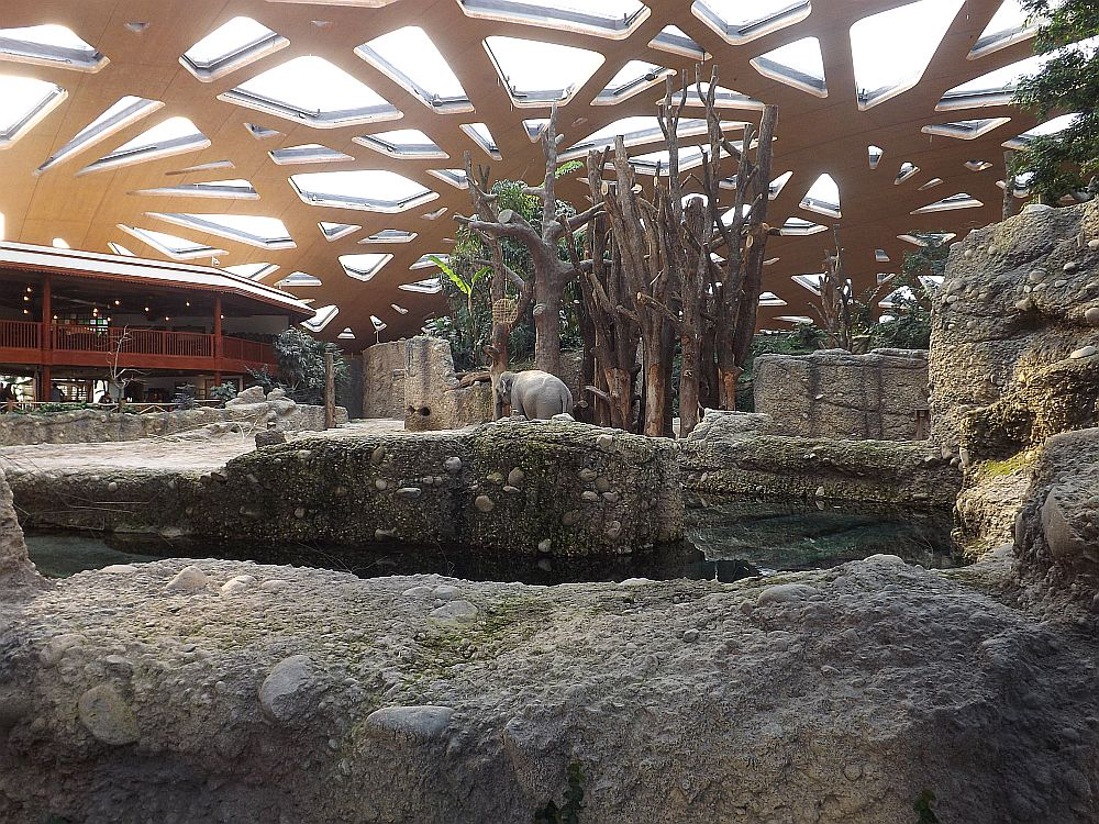 Kaeng Krachan (Zoo Zürich)