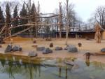 Anlage für Mantelpaviane und Rotbüffel (Zoo Augsburg)