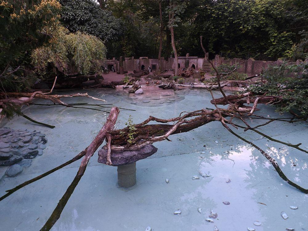 Pinguinanlage (Zoo Augsburg)