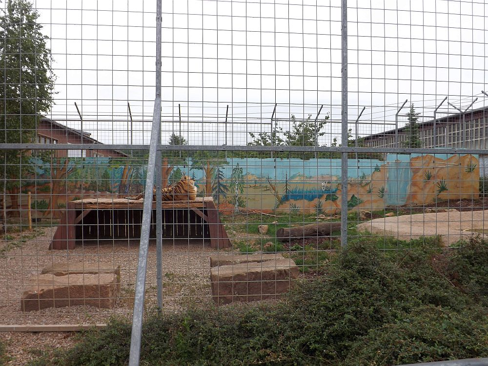 Tigergehege (Erlebnistierpark Memleben)