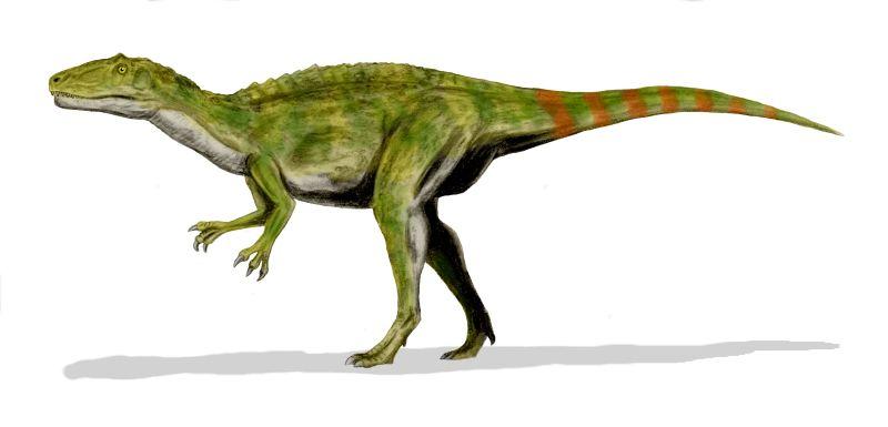 Fukuiraptor kitadaniensis (© N. Tamura)