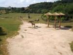 Afrikasavanne (Zoo Prag)