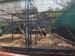 Berberaffenanlage (Zoo Bratislava)