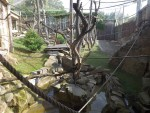 Orangutananlage (Zoo Prag)