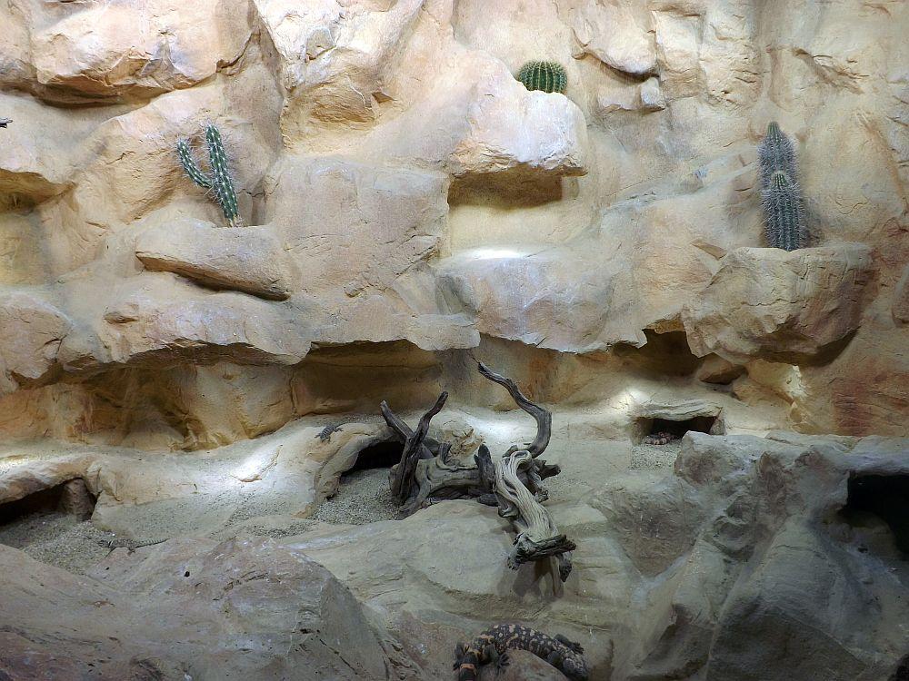 Terrarium der Gilaechsen (Haus des Meeres)