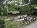 Streichelzoo (Tiergarten und Reiterhof Walding)