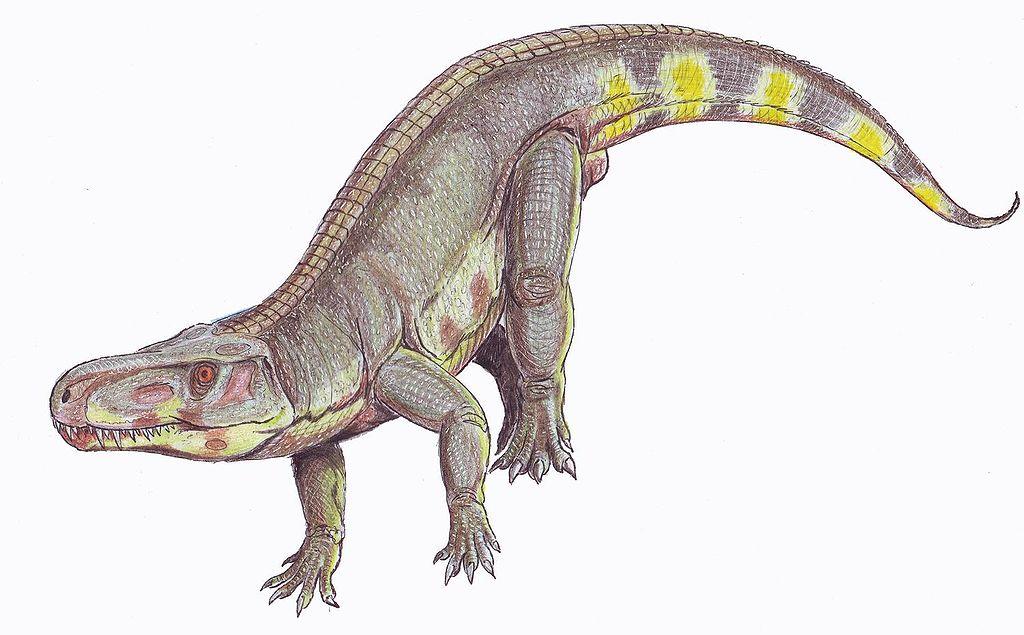 Batrachotomus kupferzellensis (Dmitry Bogdanov)