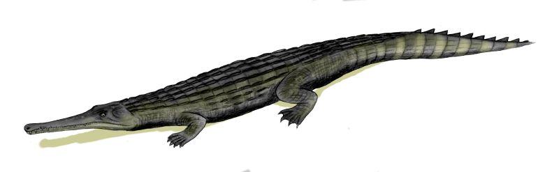 Dyrosaurus phosphaticus (© N. Tamura)