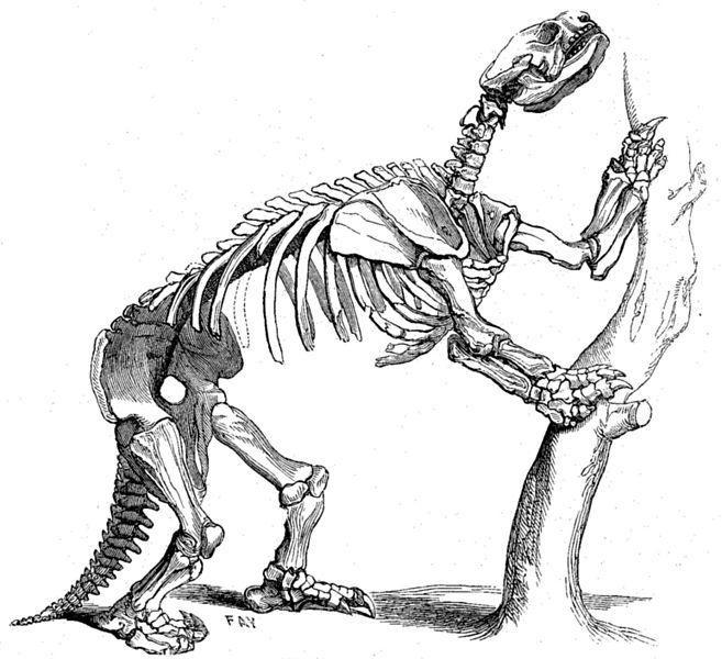 Skelett von Glossotherium robustum