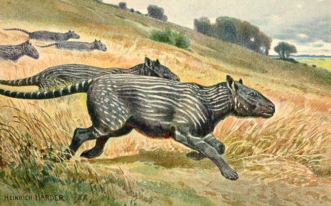 Phenacodus (Heinrich Harder)