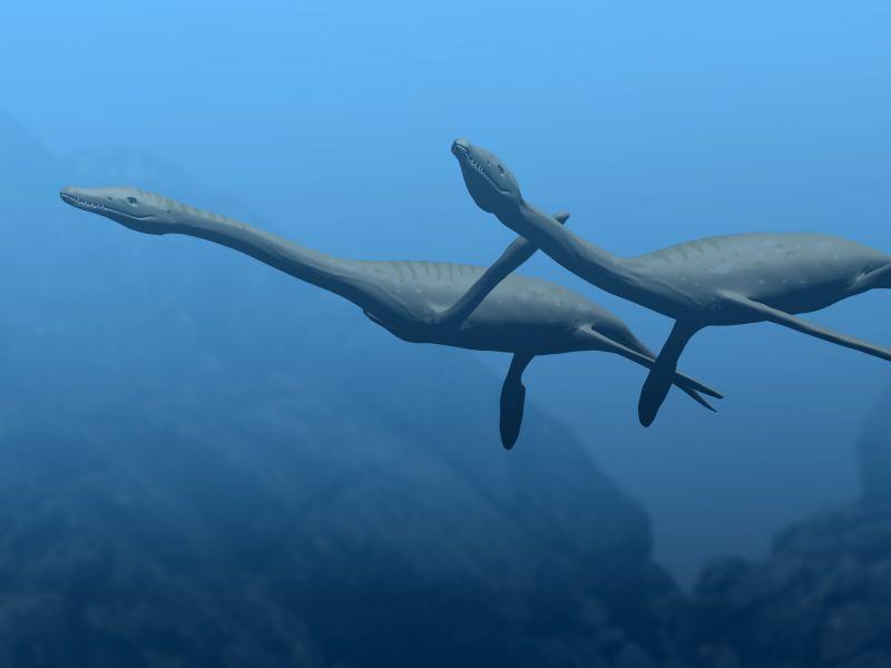 Plesiosaurus dolichodeirus (© N. Tamura)