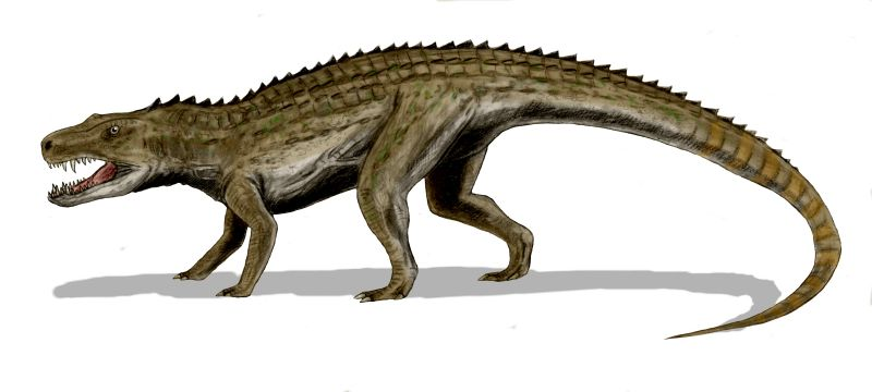 Postosuchus kirkpatricki (© N. Tamura)