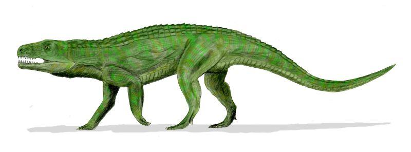 Teratosaurus suevicus (© N. Tamura)