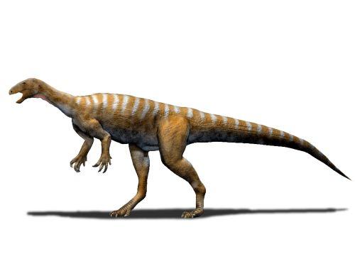 Thecodontosaurus antiquus (© N. Tamura)