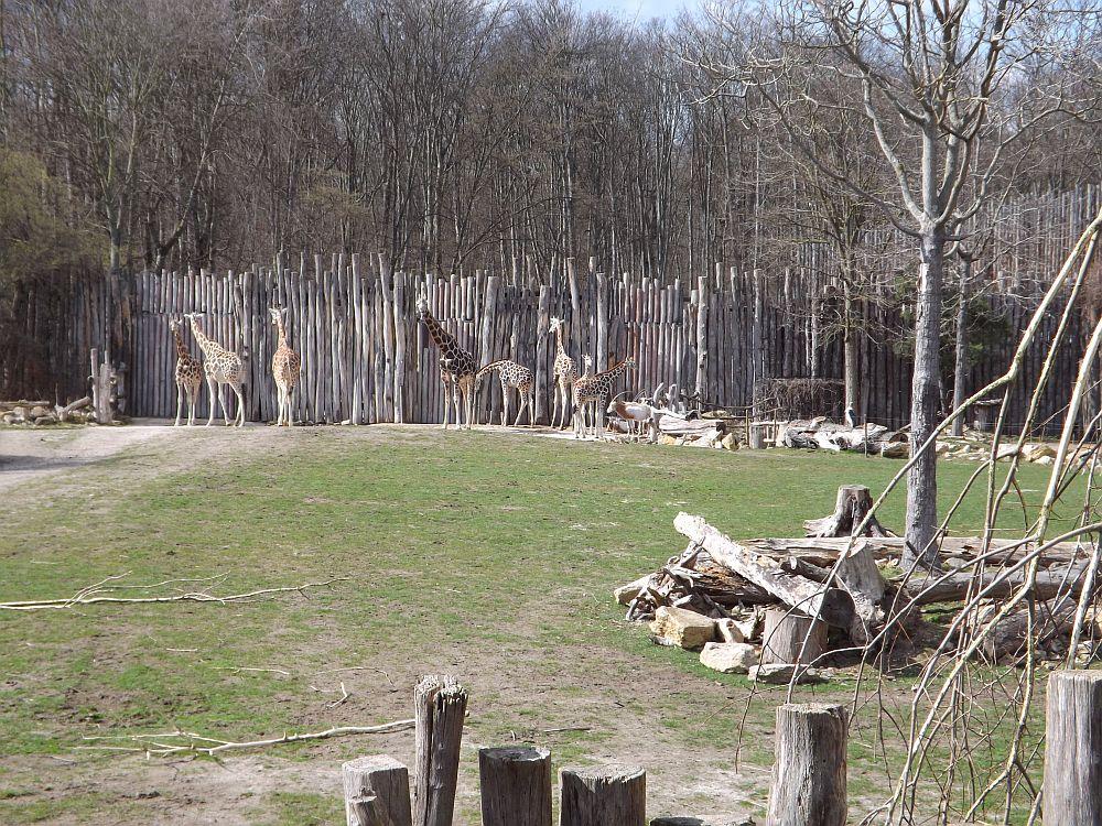 Afrikasavanne (Zoo Leipzig)
