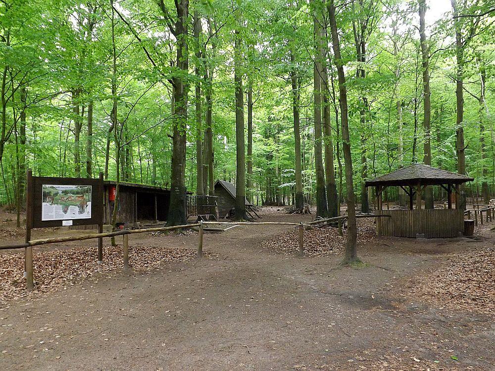 Damhirschanlage (Tierpark Kunsterspring)