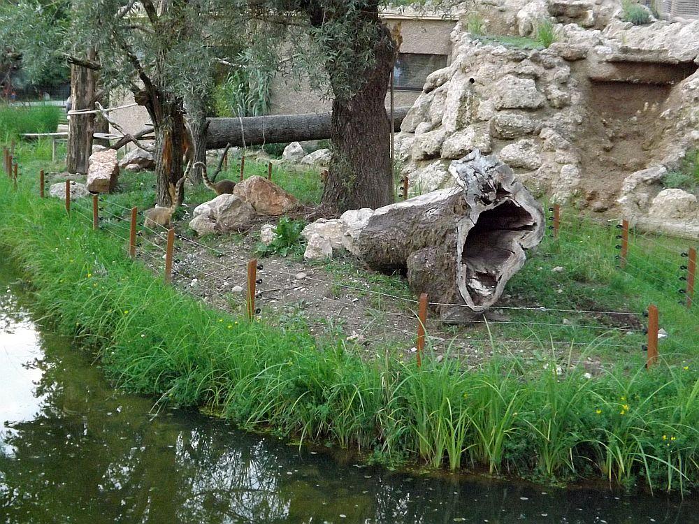 Nasenbärenanlage (Zoo Salzburg)