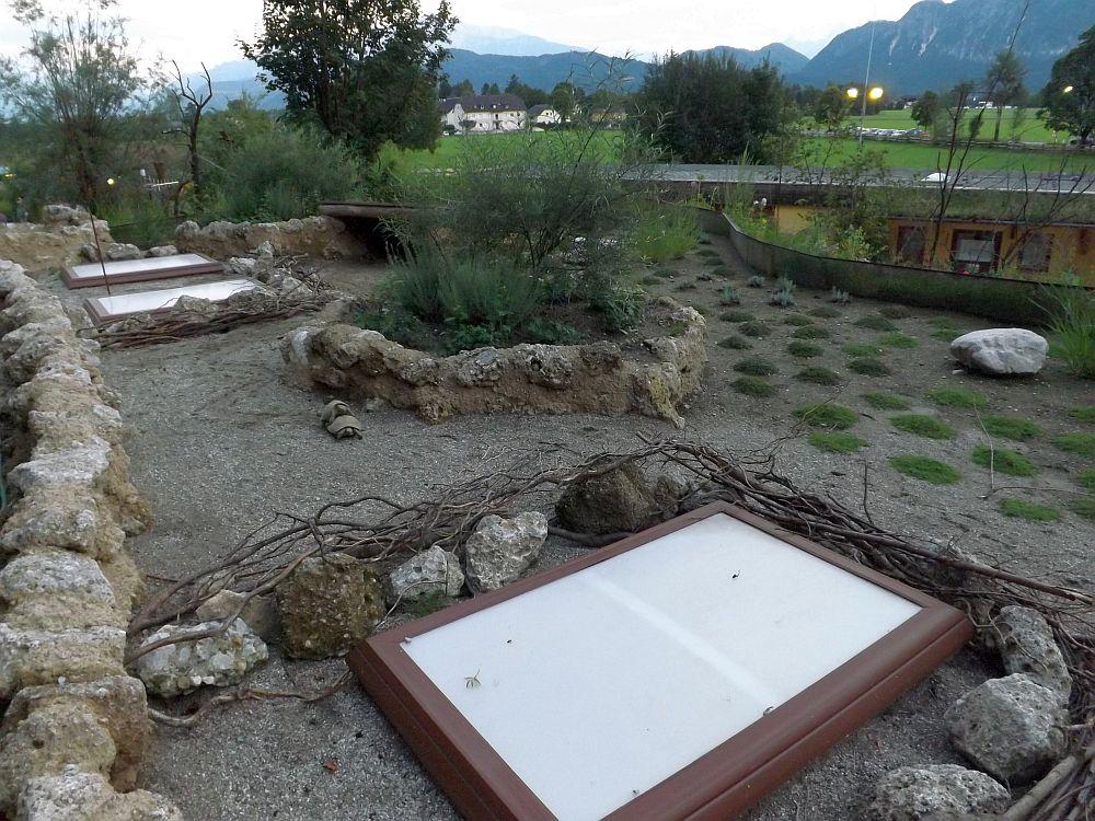 Anlage für Europäische Landschildkröten (Zoo Salzburg)