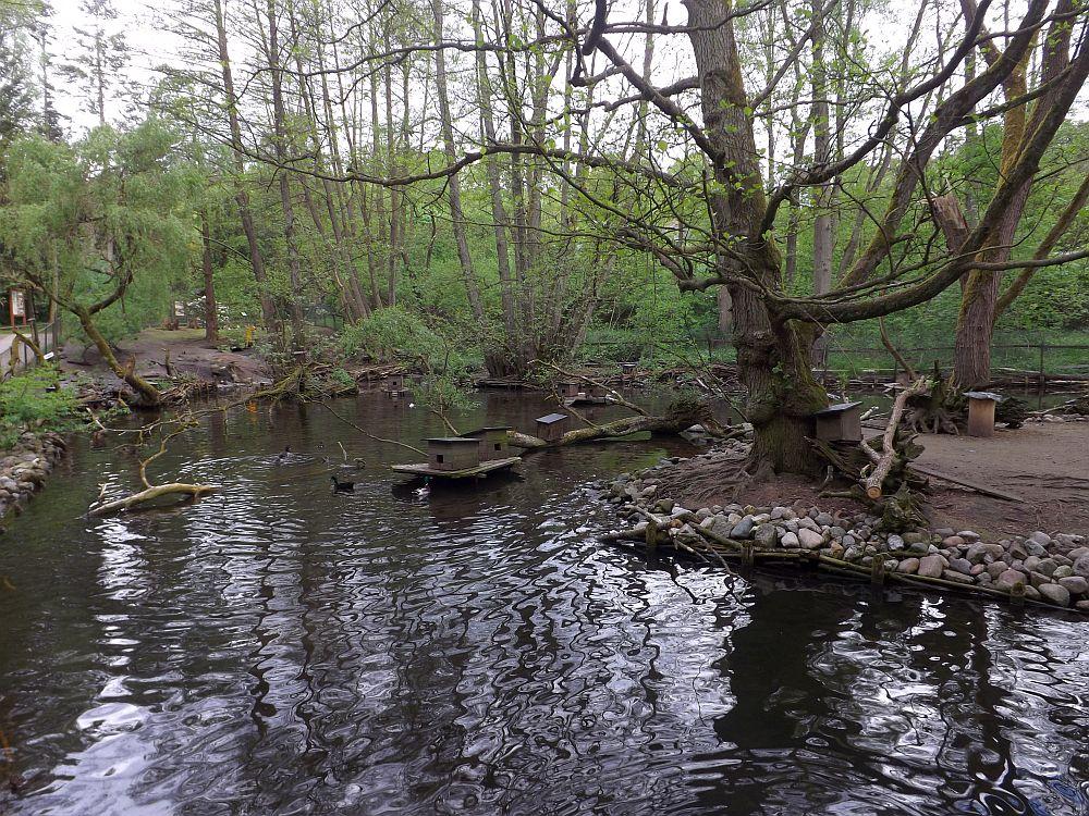 Teich (Tierpark Kunsterspring)