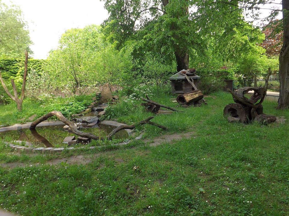 Waschbäranlage (Tierpark Dessau)