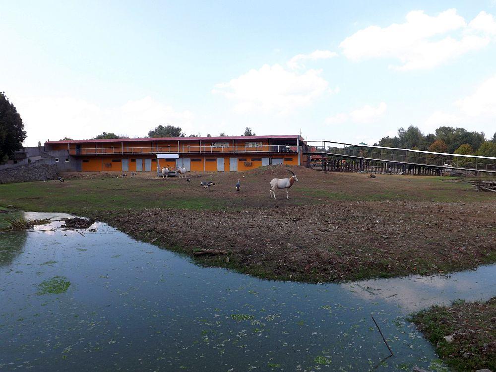 Afrikaanlage (Olmense Zoo)