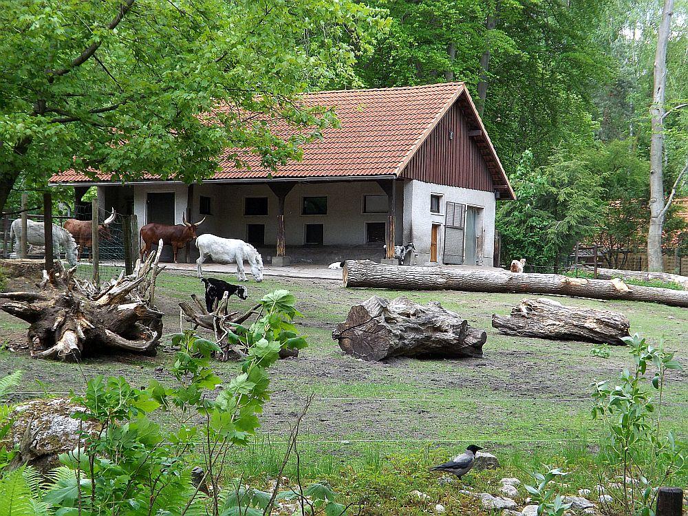 Afrikanische Haustiere (Zoo Ebeswalde)
