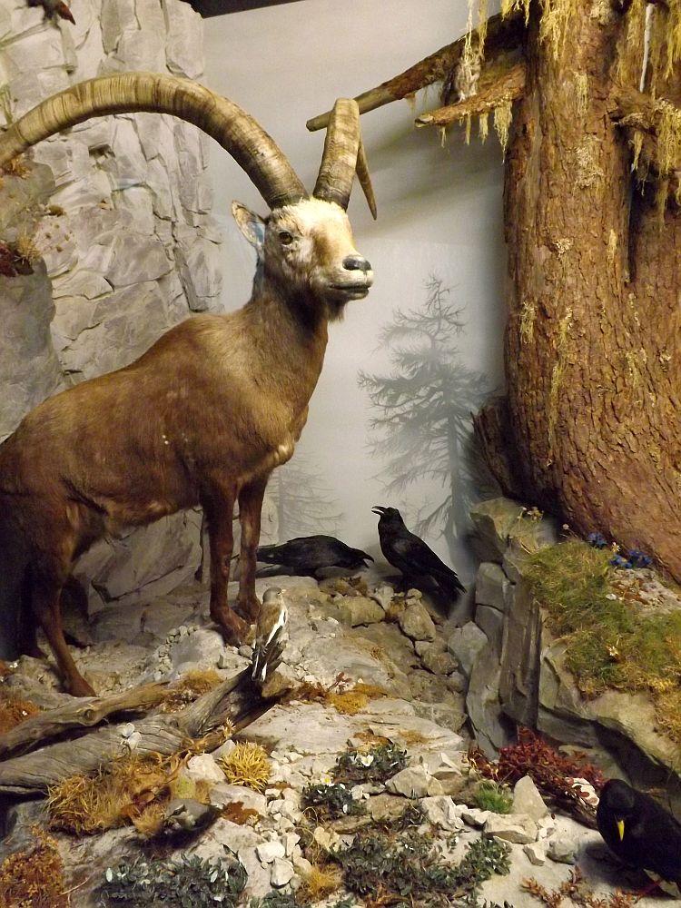 Alpendiorama (Naturmuseum Augsburg)