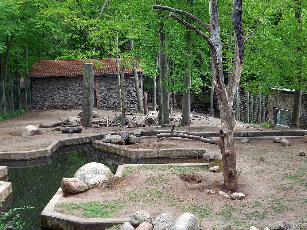 Bärengehege (Zoo Eberswalde)