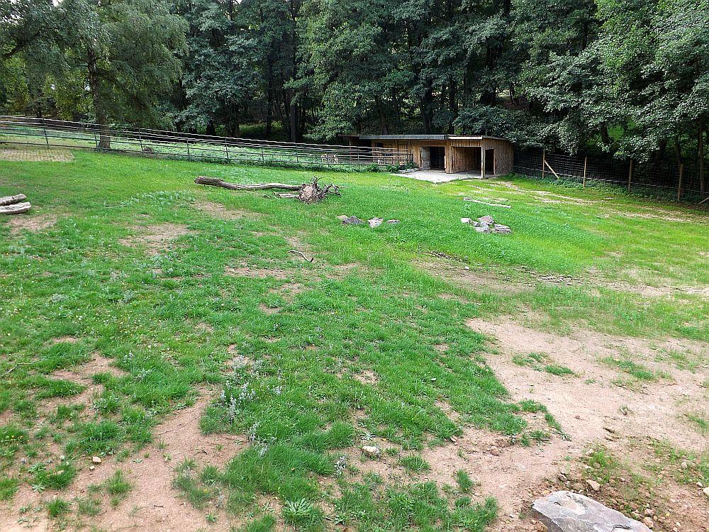 Baustelle Asien (Zoo Neunkirchen)