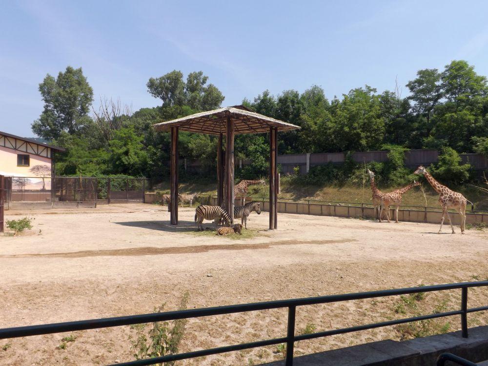 Afrika-Anlage (Zoo Bratislava)