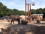 Elefantenanlage (Ouwehands Dierenpark)