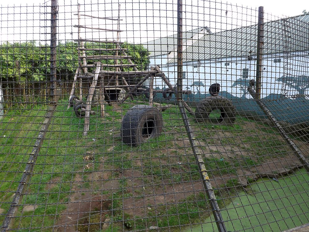 Schimpansenanlage (Olmense Zoo)
