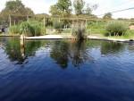 Seehundanlage (Ouwehands Dierenpark)