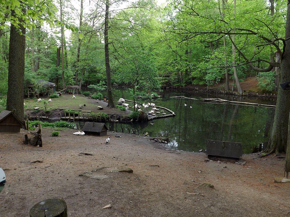 Teich (Zoo Eberswalde)