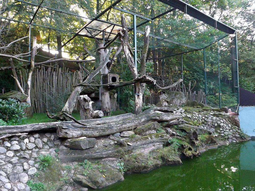 Anlage für Katzenbären, 2015 (Zoo Saarbrücken)