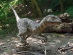 Velociraptor (Zoo Bratislava)