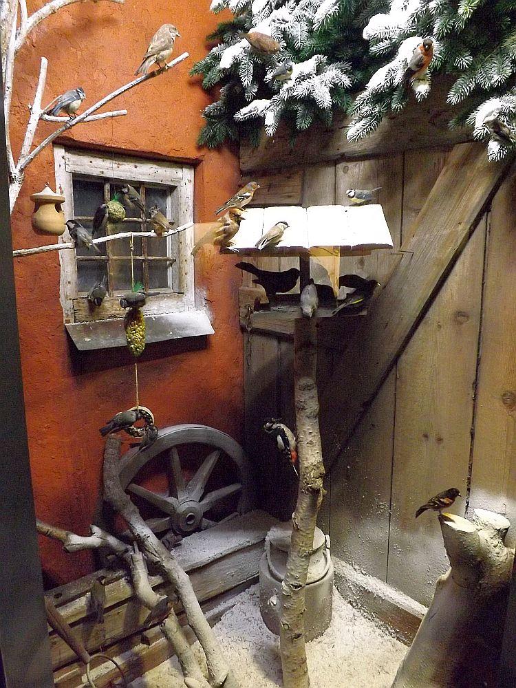 Wintervögeldiorama (Naturmuseum Augsburg)
