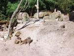 Erdmännchenanlage (Tierpark Hamm)
