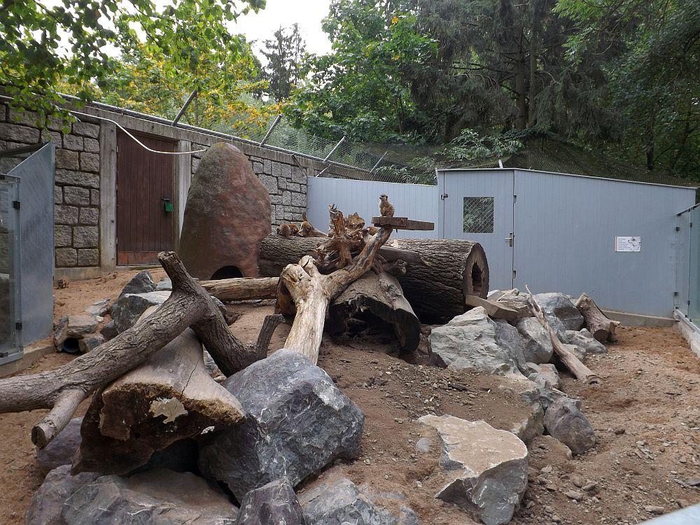 Erdmännchenanlage (Zoologischer Garten Hof)