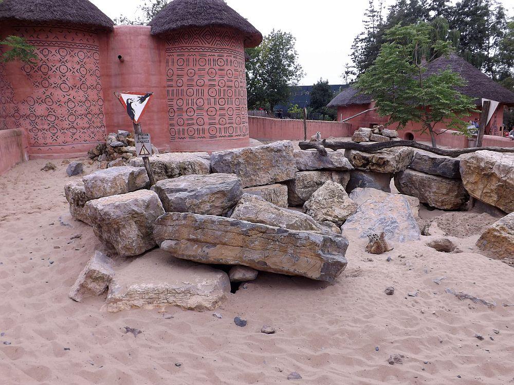 Erdmännchen- und Pinselohrschweinanlage (Pairi Daiza)