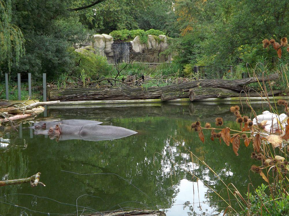 Flusspferdanlage (Zoo Antwerpen)